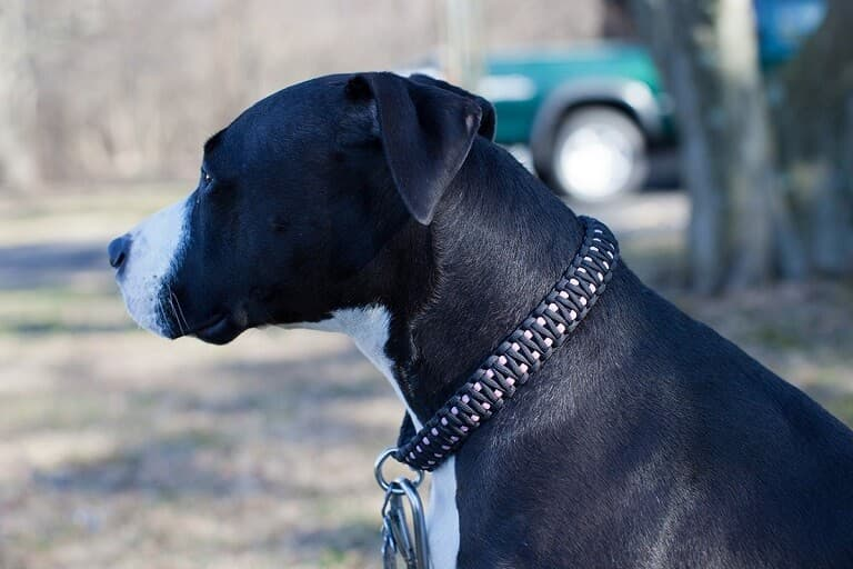 Collar Perro Paracord